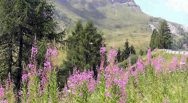 Dolomiti, Trentino-Alto AdigeVeneto. Autore e Copyright Marco Ramerini..