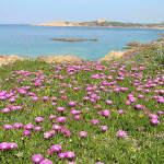 Isola Rossa, Sardegna. Autore e Copyright Marco Ramerini
