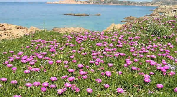 Isola Rossa, Sardaigne. Auteur et Copyright Marco Ramerini