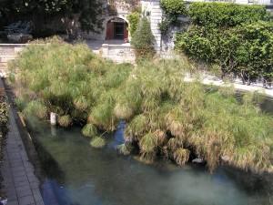 Fontaine d'Aréthuse, Ortigia, Syracuse, Sicile. Auteur et Copyright Marco Ramerini