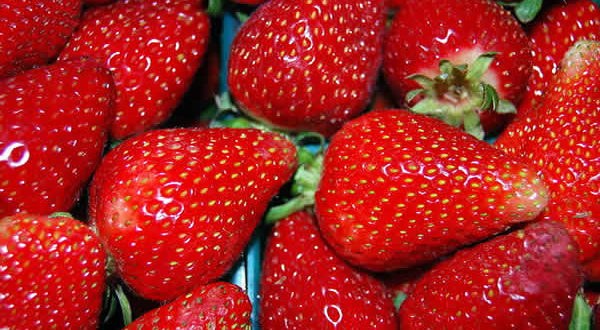 Fragole. Autore Fastily. Licensed under the Creative Commons Attribution-Share Alike