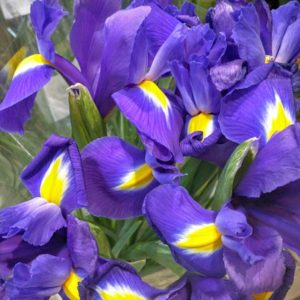 Giaggiolo (Iris). Autore Assianir. Licensed under the Creative Commons Attribution