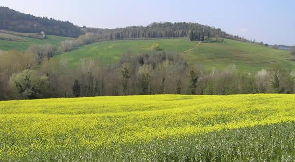 Chianti in primavera, Barberino Val d'Elsa, Firenze. Autore e Copyright Marco Ramerini